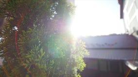 A luz dos raios de Sun brilha através das árvores filme