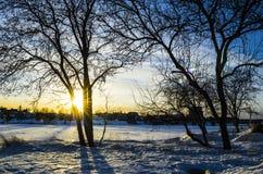 Luz dourada da hora do por do sol através dos ramos de árvore fotos de stock royalty free