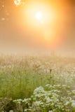 Luz dourada no prado nevoento Foto de Stock Royalty Free