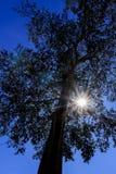 A luz e a árvore do sol Imagem de Stock Royalty Free