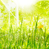 Luz e crescimento da mola fotos de stock royalty free