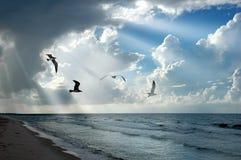 Luz e gaivotas Fotos de Stock