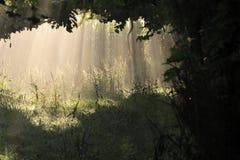Luz e sombra Imagens de Stock