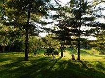 Luz e sombras no parque imagem de stock