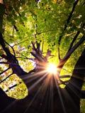Luz em uma árvore Imagens de Stock Royalty Free
