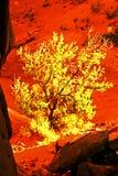 Luz en árbol en parque nacional de los arcos Foto de archivo libre de regalías