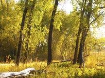 Luz en el bosque imagenes de archivo