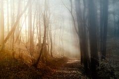 Luz en el bosque Foto de archivo libre de regalías