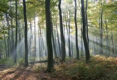 Luz en el bosque Fotos de archivo