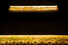 luz en el piso del cemento de la calle con la hierba fotografía de archivo libre de regalías