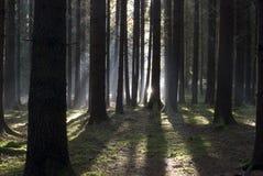 Luz en madera Foto de archivo libre de regalías
