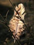 Luz encendida parte posterior de la pluma de pájaro imágenes de archivo libres de regalías
