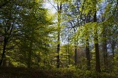 Luz entre as árvores Fotos de Stock Royalty Free
