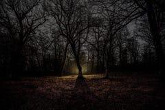 luz estranha em uma floresta escura na noite Silhueta da pessoa que está na floresta escura com luz Noite escura na floresta na n Foto de Stock