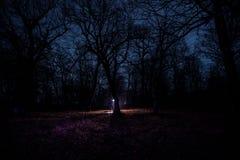 luz estranha em uma floresta escura na noite Silhueta da pessoa que está na floresta escura com luz Noite escura na floresta na n Imagem de Stock