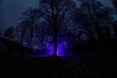 luz estranha em uma floresta escura na noite Silhueta da pessoa que está na floresta escura com luz Noite escura na floresta na n Imagens de Stock