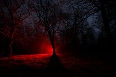 luz estranha em uma floresta escura na noite Silhueta da pessoa que está na floresta escura com luz Noite escura na floresta na n Foto de Stock Royalty Free