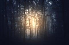 Luz estranha na floresta surreal Foto de Stock Royalty Free