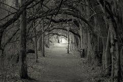 Luz fantasmagórica en el extremo Foto de archivo