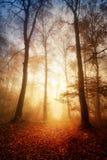 Luz fascinadora en un bosque de niebla imagen de archivo