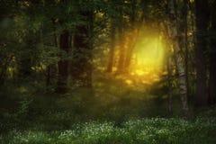 Luz feericamente em uma floresta da mola em um esclarecimento com flores Imagens de Stock