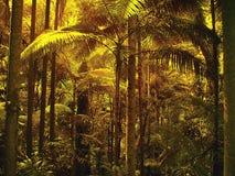 Luz filtrada através das folhas de palmeira na floresta tropical tropical secundária imagem de stock
