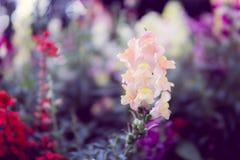 Luz - flor amarela fotos de stock
