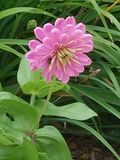 Luz - flor cor-de-rosa fotografia de stock