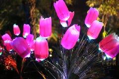 Luz - flor cor-de-rosa Foto de Stock