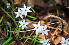 Luz - flores azuis Imagens de Stock