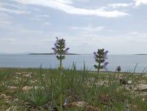 Luz - flores azuis pelo mar Foto de Stock Royalty Free
