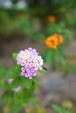 Luz - flores roxas imagens de stock