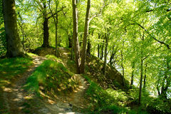 Luz - floresta verde Imagens de Stock Royalty Free
