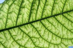 Luz - folha verde foto de stock royalty free