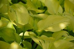 Luz - folha verde imagem de stock royalty free