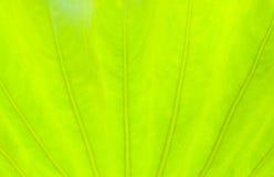 Luz - fundo verde da natureza do sumário da folha Fotos de Stock Royalty Free
