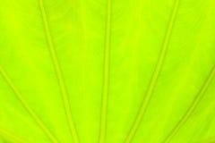 Luz - fundo verde da natureza do sumário da folha Foto de Stock Royalty Free
