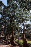 Luz Garden in Sao Paulo Brazil Stock Images