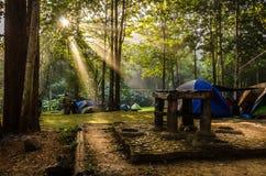 Luz hermosa de la mañana Fotos de archivo libres de regalías