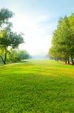 Luz hermosa de la mañana en parque público con el campo de hierba verde Imagen de archivo