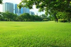 Luz hermosa de la mañana en parque público con el campo de hierba verde Fotografía de archivo libre de regalías