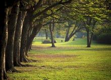 Luz hermosa de la mañana en parque público con el campo de hierba verde Foto de archivo libre de regalías