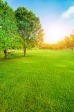 Luz hermosa de la mañana en parque público con el campo de hierba verde VE Imágenes de archivo libres de regalías