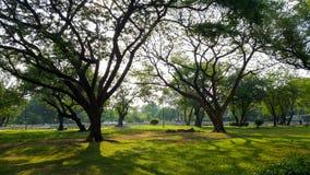 Luz hermosa de la mañana en parque público con el campo de hierba verde y la planta fresca verde del árbol Imagen de archivo