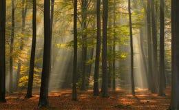 Luz hermosa del otoño en el bosque Fotos de archivo