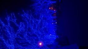 Luz iluminada azul en la calle en Harajuku Tokio almacen de video