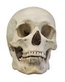 Luz isolada - crânio humano amarelo Fotografia de Stock Royalty Free