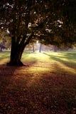 Luz mágica del bosque Foto de archivo
