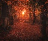 Luz mágica del sol en bosque del otoño imagenes de archivo