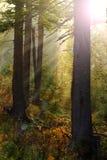 Luz mágica en el bosque Fotografía de archivo